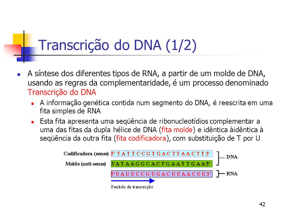 Transcrição do DNA (1/2)