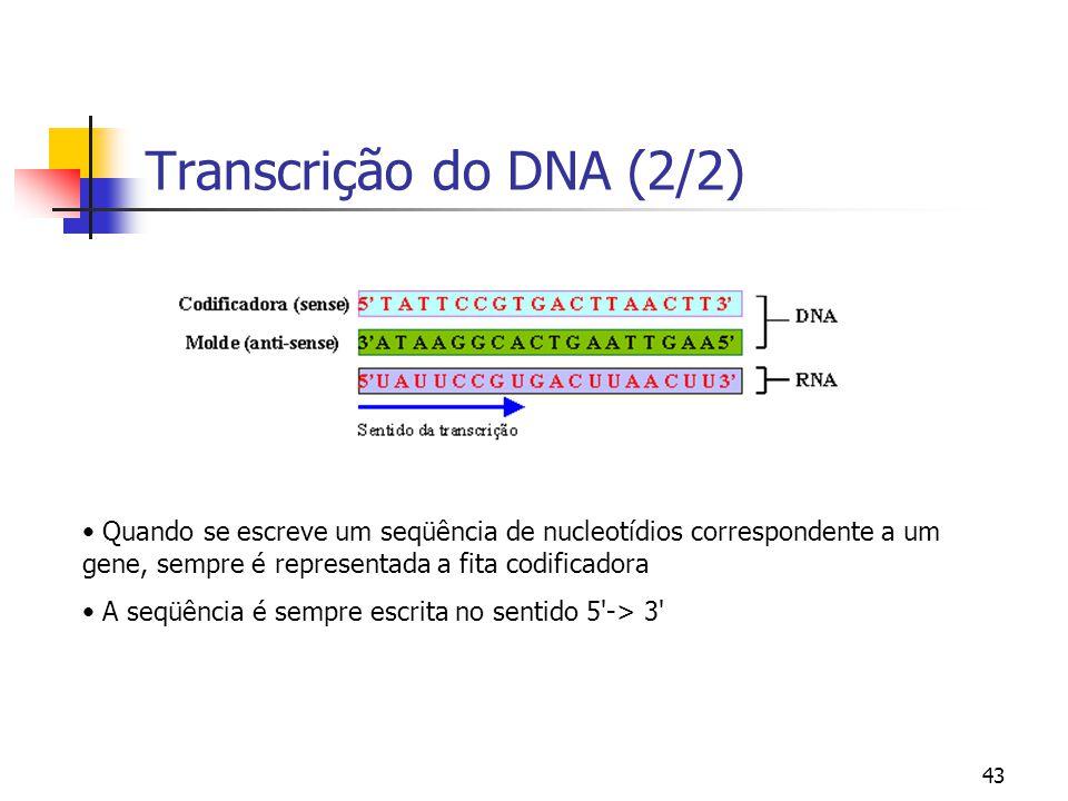 Transcrição do DNA (2/2) Quando se escreve um seqüência de nucleotídios correspondente a um gene, sempre é representada a fita codificadora.
