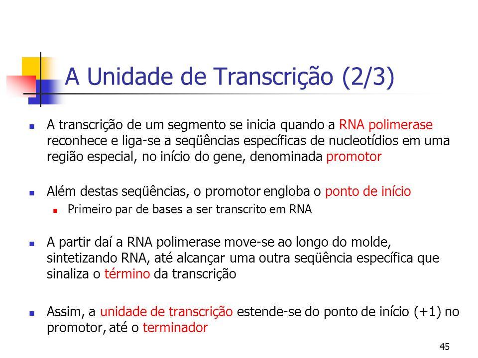 A Unidade de Transcrição (2/3)