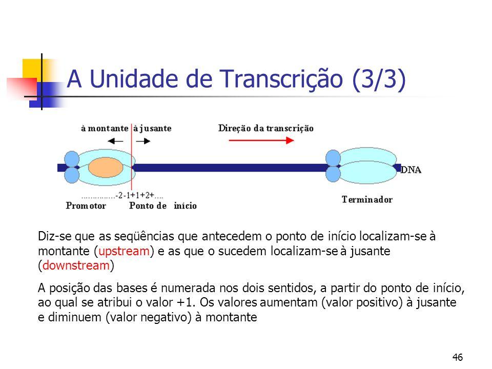 A Unidade de Transcrição (3/3)