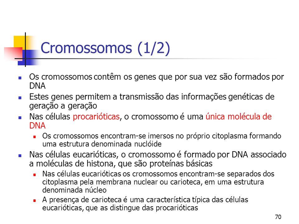 Cromossomos (1/2) Os cromossomos contêm os genes que por sua vez são formados por DNA.
