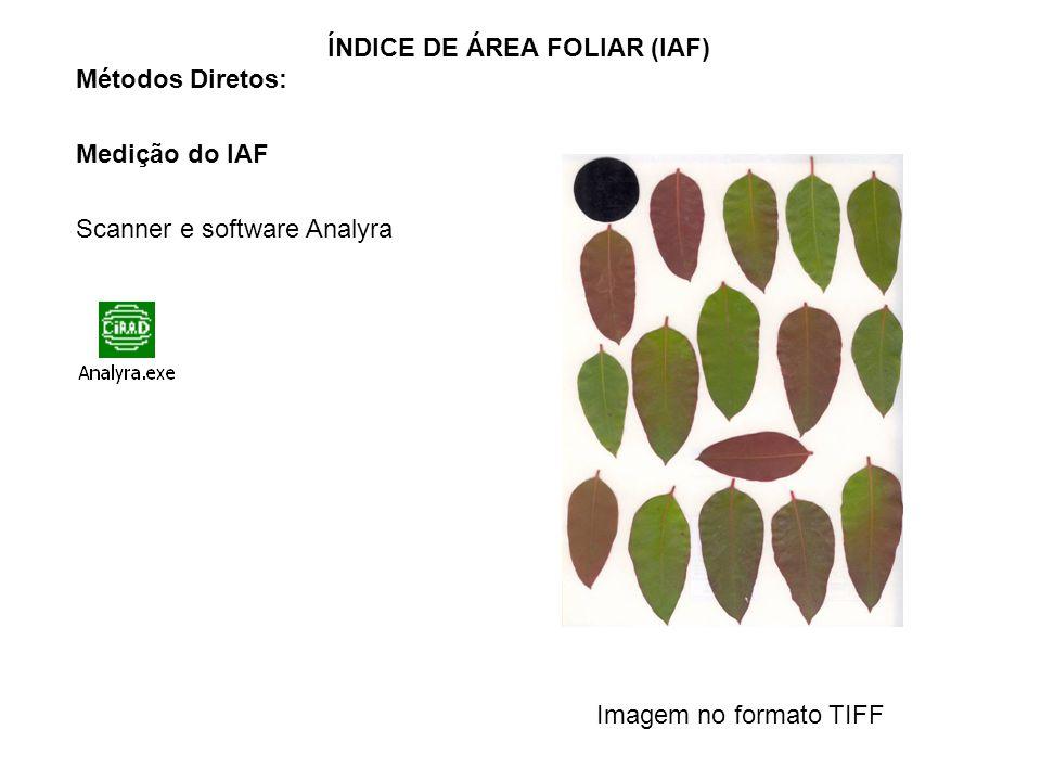 ÍNDICE DE ÁREA FOLIAR (IAF)