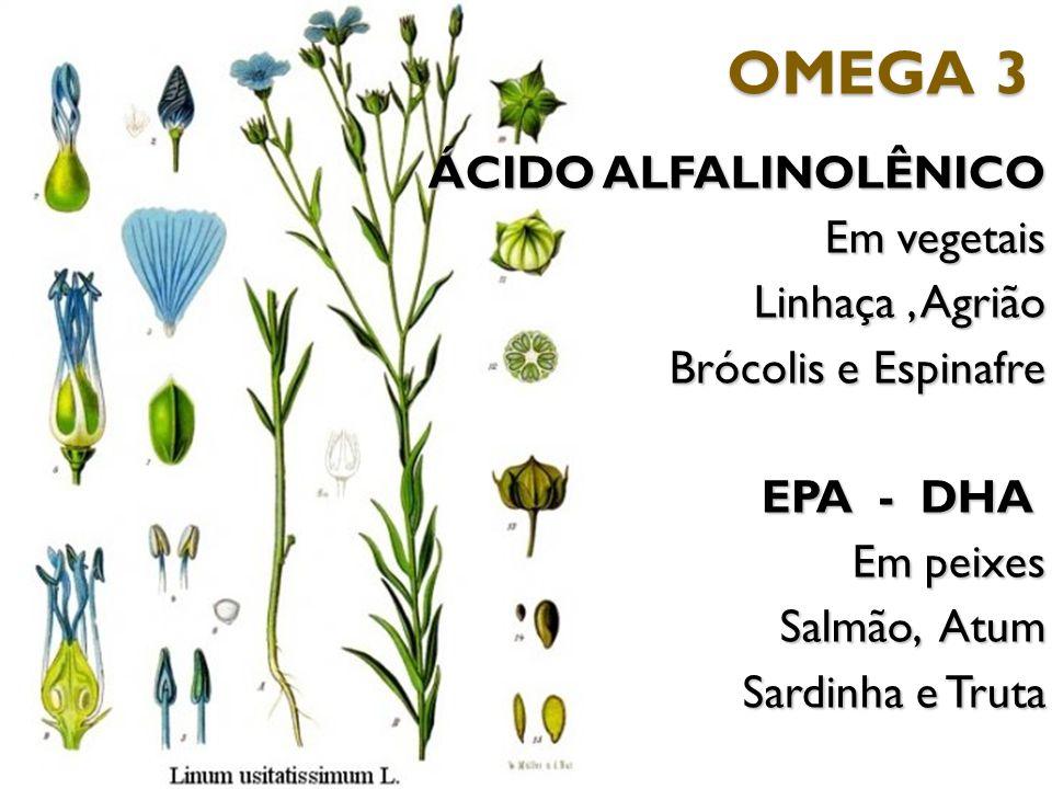 OMEGA 3 ÁCIDO ALFALINOLÊNICO Em vegetais Linhaça , Agrião Brócolis e Espinafre EPA - DHA Em peixes Salmão, Atum Sardinha e Truta
