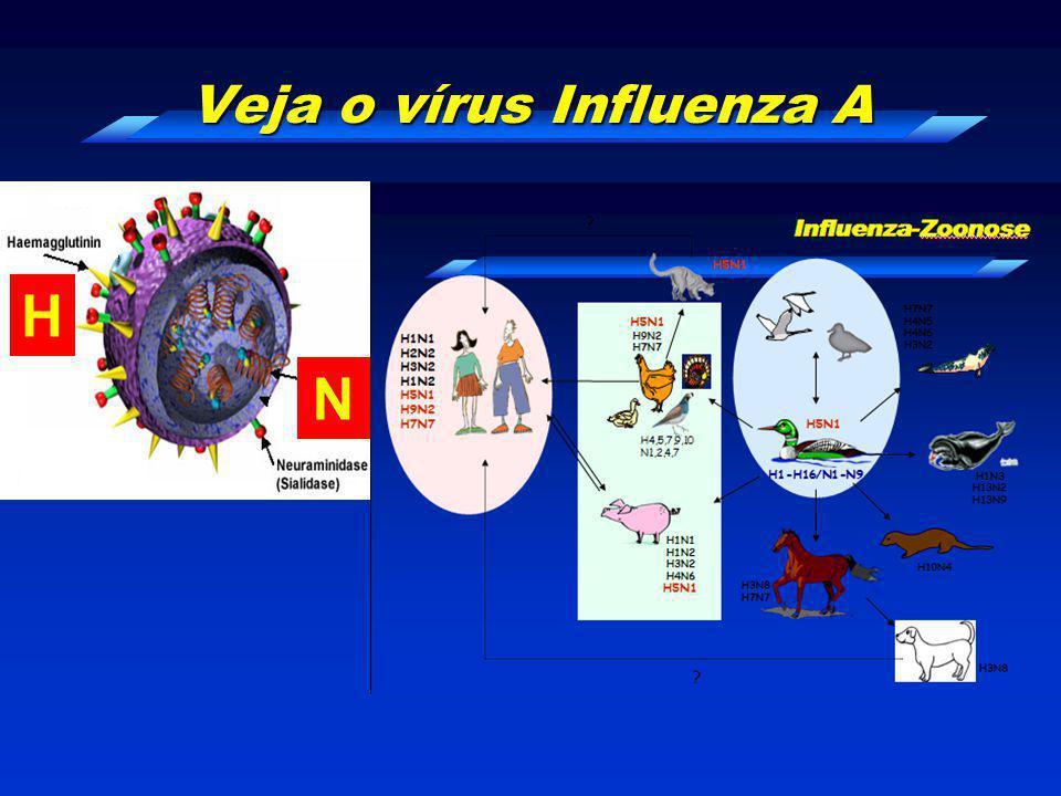 Veja o vírus Influenza A