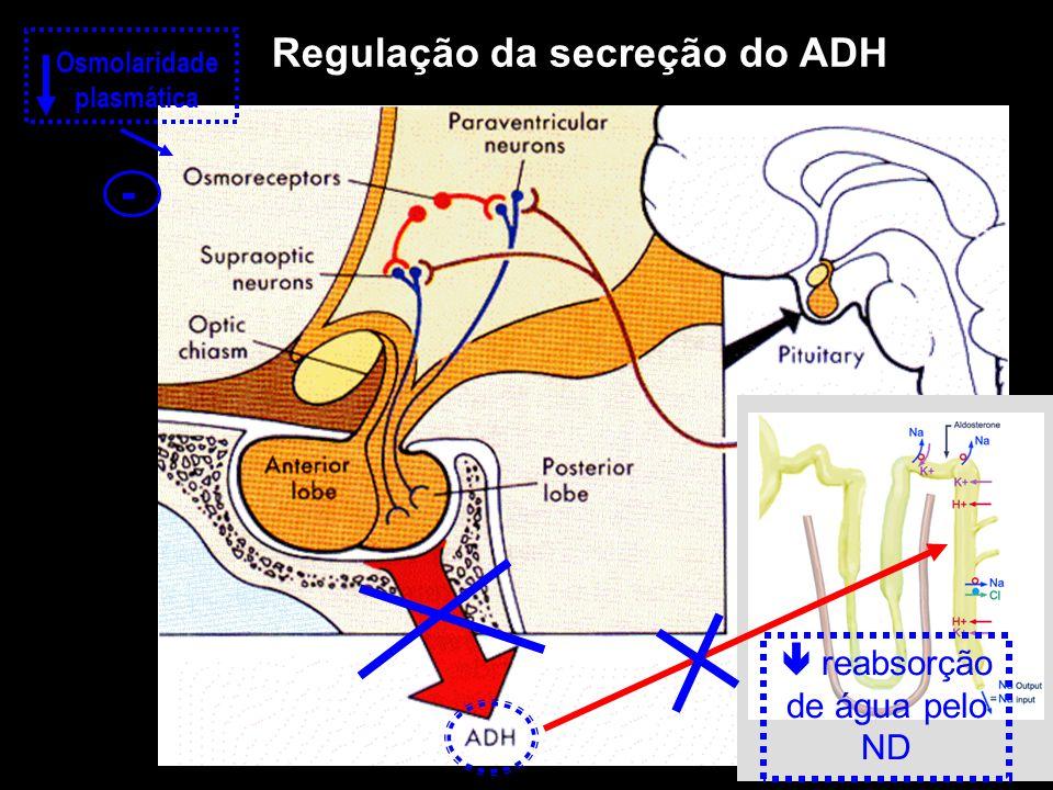 Regulação da secreção do ADH Osmolaridade plasmática