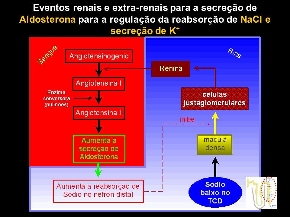 Eventos renais e extra-renais para a secreção de Aldosterona para a regulação da reabsorção de NaCl e secreção de K+