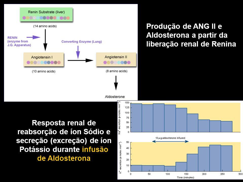 Produção de ANG II e Aldosterona a partir da liberação renal de Renina