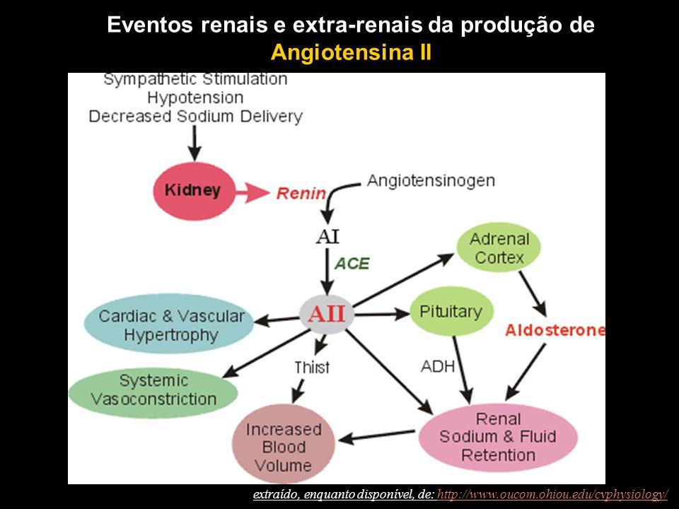 Eventos renais e extra-renais da produção de Angiotensina II