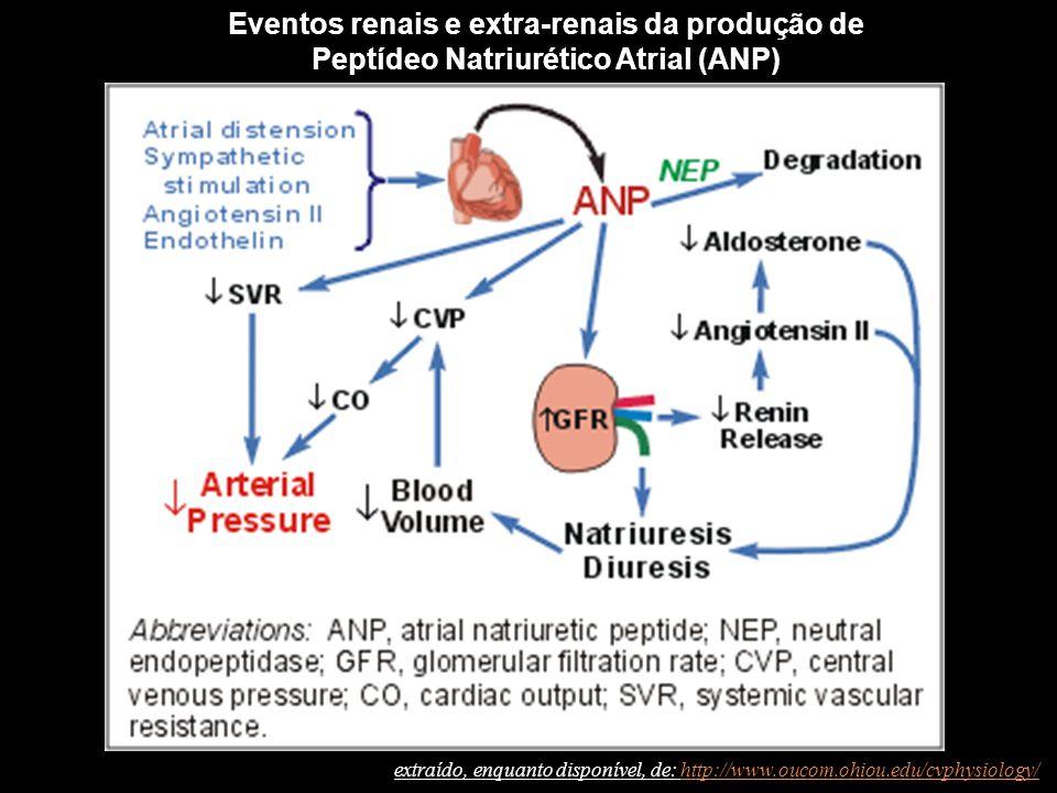 Eventos renais e extra-renais da produção de