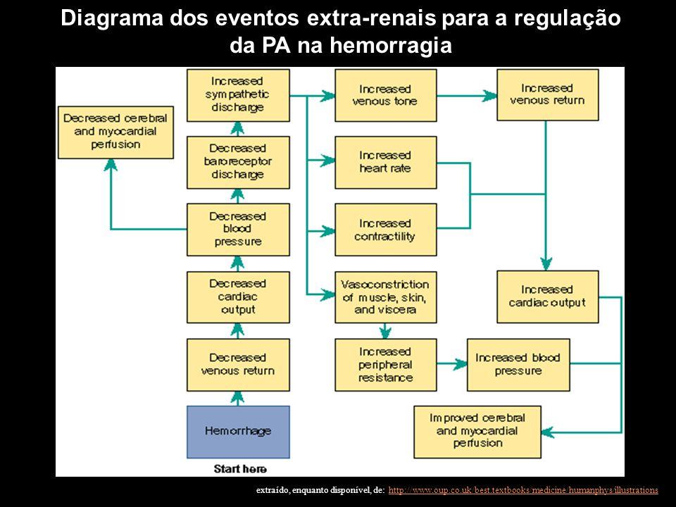 Diagrama dos eventos extra-renais para a regulação da PA na hemorragia