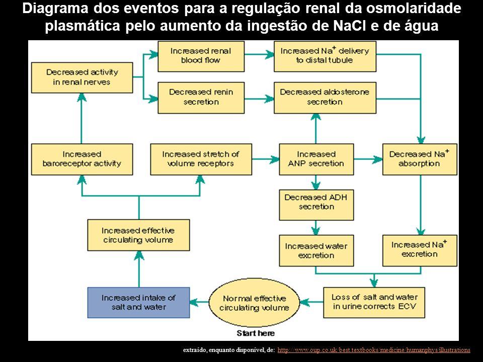 Diagrama dos eventos para a regulação renal da osmolaridade plasmática pelo aumento da ingestão de NaCl e de água