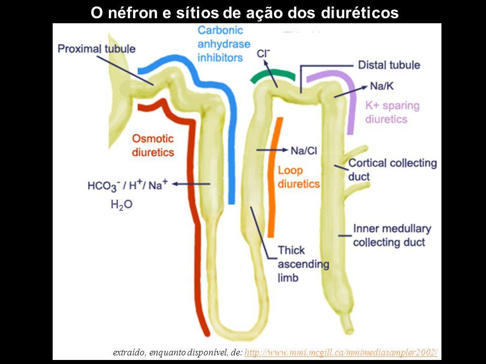 O néfron e sítios de ação dos diuréticos