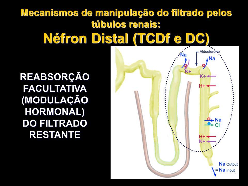 Néfron Distal (TCDf e DC)