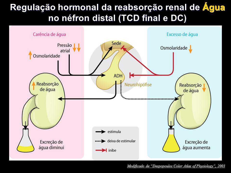 Regulação hormonal da reabsorção renal de Água