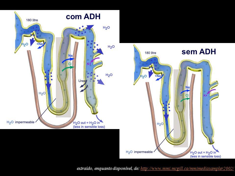 com ADH sem ADH extraído, enquanto disponível, de: http://www.mmi.mcgill.ca/mmimediasampler2002/