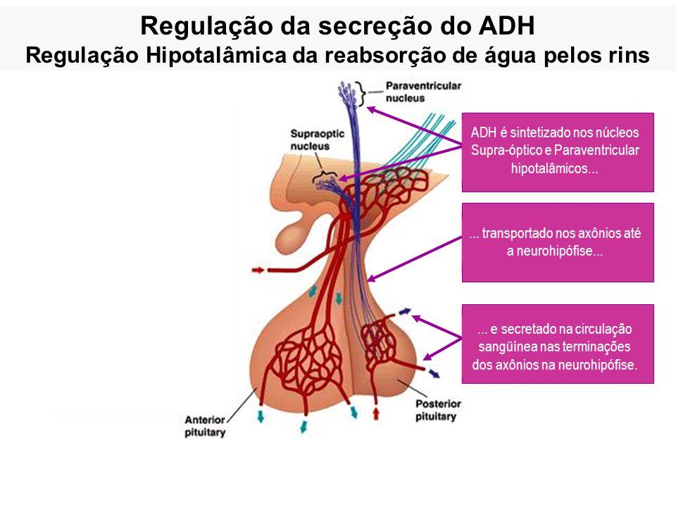 Regulação da secreção do ADH