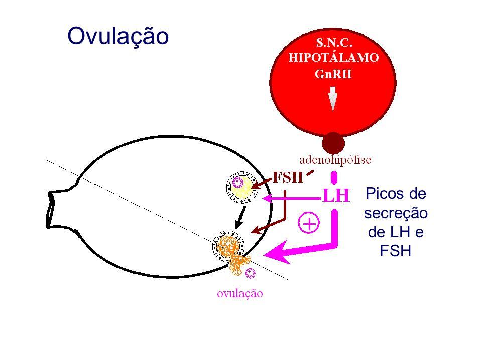 Picos de secreção de LH e FSH
