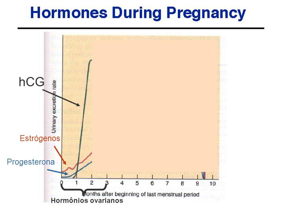 hCG Estrógenos Progesterona Hormônios ovarianos