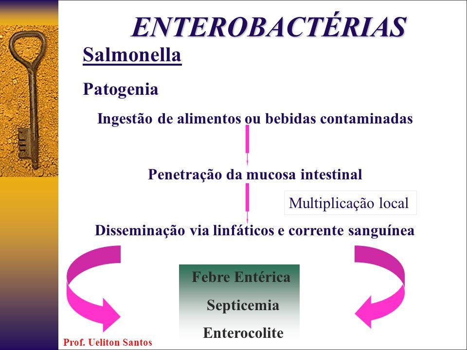 ENTEROBACTÉRIAS Salmonella Patogenia