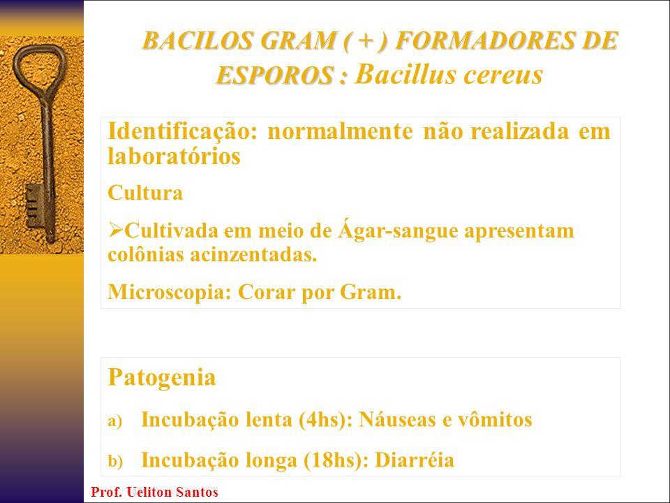 BACILOS GRAM ( + ) FORMADORES DE ESPOROS : Bacillus cereus