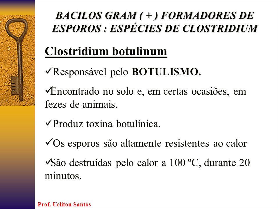 BACILOS GRAM ( + ) FORMADORES DE ESPOROS : ESPÉCIES DE CLOSTRIDIUM