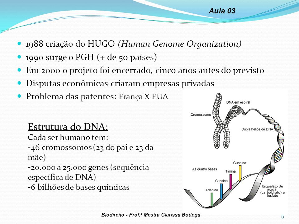 Estrutura do DNA: 1988 criação do HUGO (Human Genome Organization)