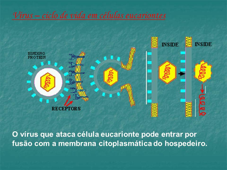 Vírus – ciclo de vida em células eucariontes