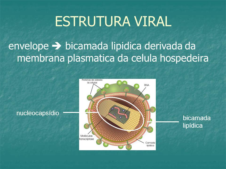 ESTRUTURA VIRAL envelope  bicamada lipidica derivada da membrana plasmatica da celula hospedeira. nucleocapsídio.