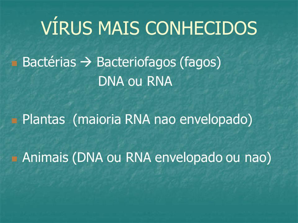 VÍRUS MAIS CONHECIDOS Bactérias  Bacteriofagos (fagos) DNA ou RNA