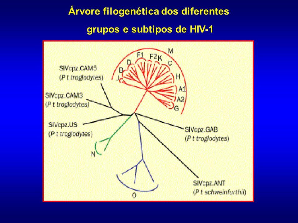 Árvore filogenética dos diferentes grupos e subtipos de HIV-1