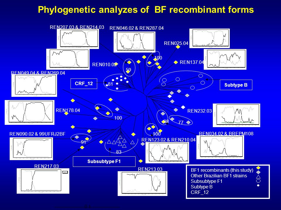 Phylogenetic analyzes of BF recombinant forms