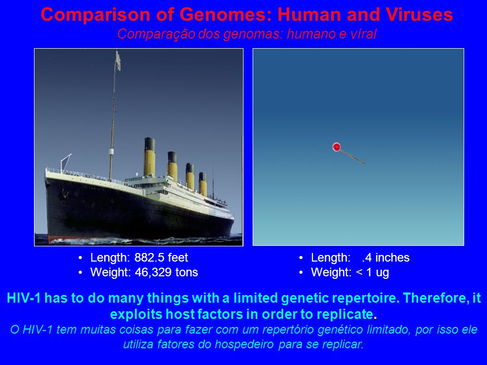 Comparison of Genomes: Human and Viruses