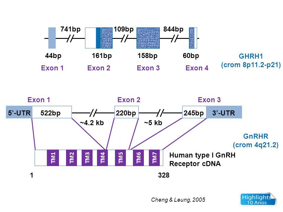 GHRH1 (crom 8p11.2-p21) GnRHR (crom 4q21.2)