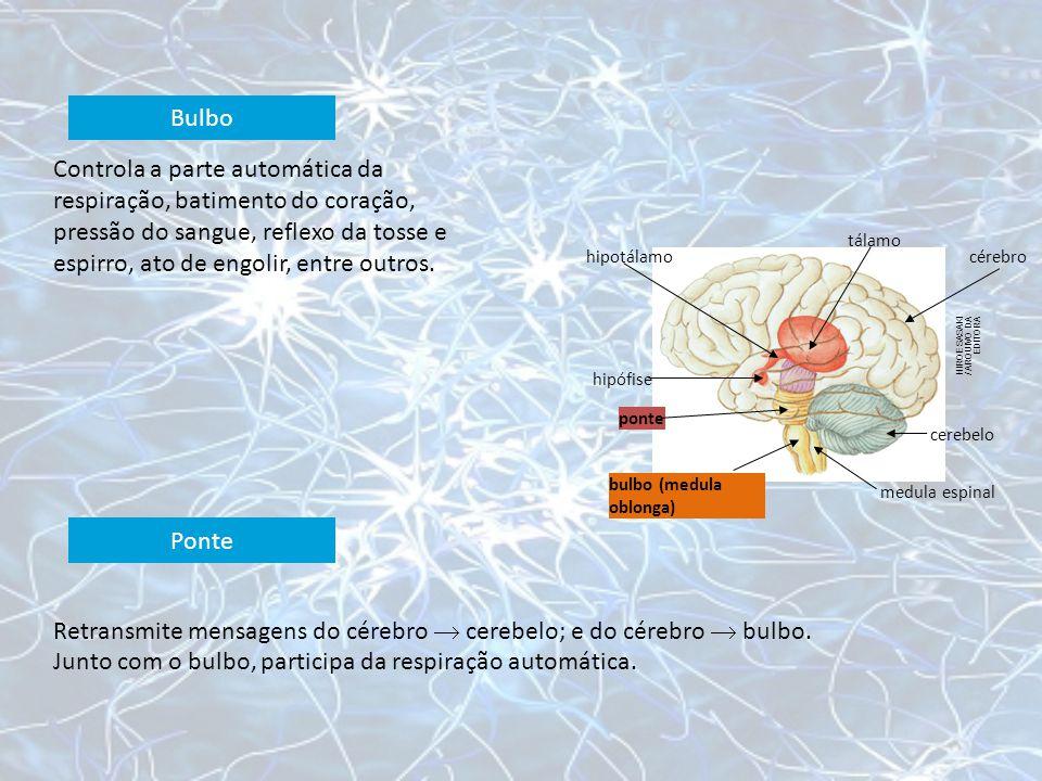 Retransmite mensagens do cérebro  cerebelo; e do cérebro  bulbo.