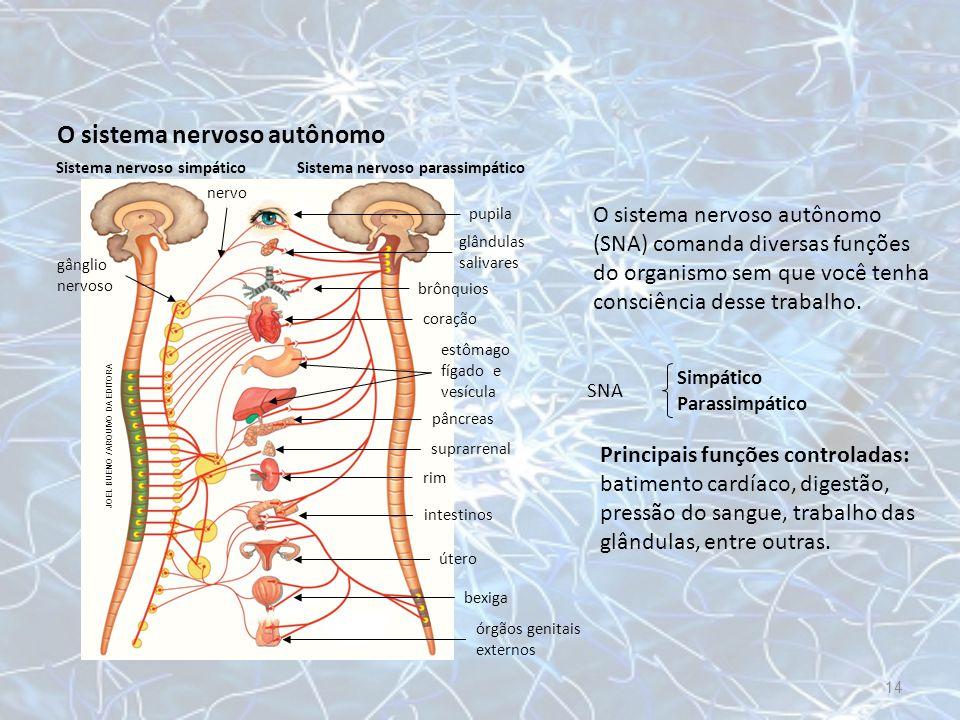 O sistema nervoso autônomo