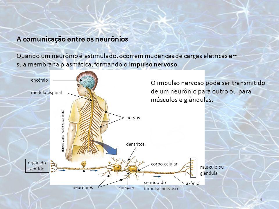 A comunicação entre os neurônios