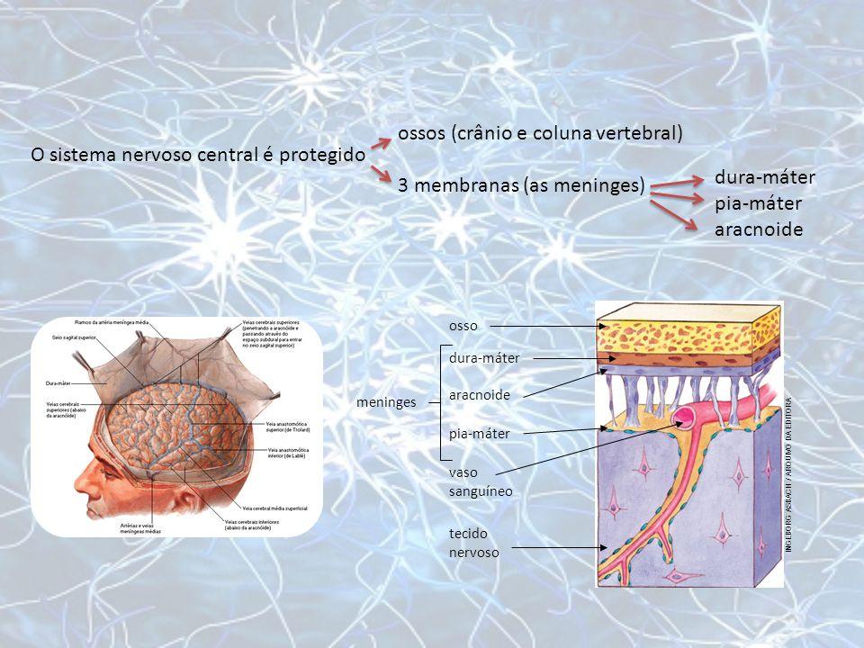 ossos (crânio e coluna vertebral) 3 membranas (as meninges)