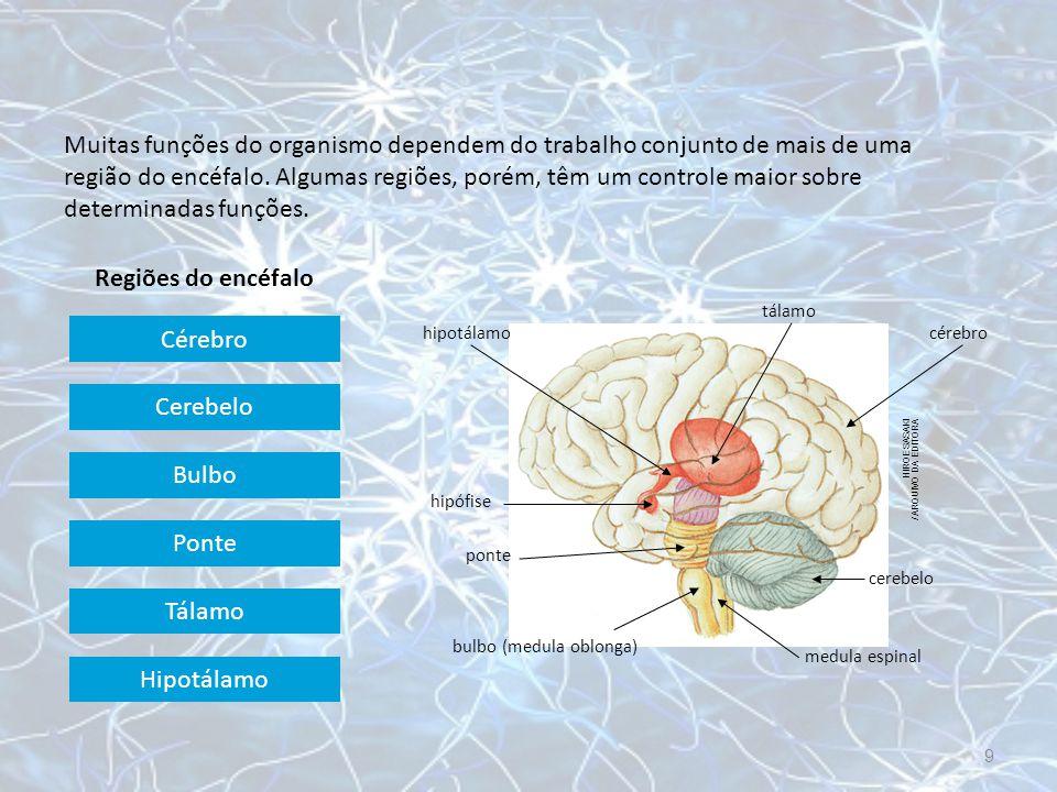Muitas funções do organismo dependem do trabalho conjunto de mais de uma região do encéfalo. Algumas regiões, porém, têm um controle maior sobre determinadas funções.