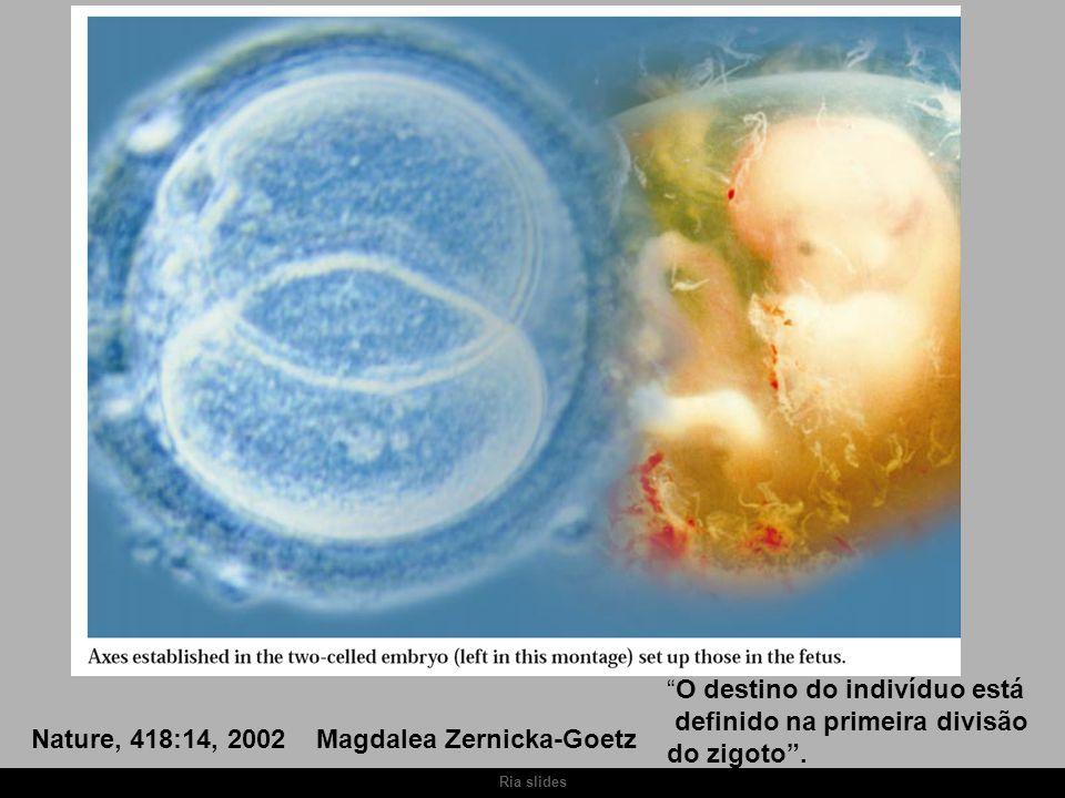Nature, 418:14, 2002 Magdalea Zernicka-Goetz