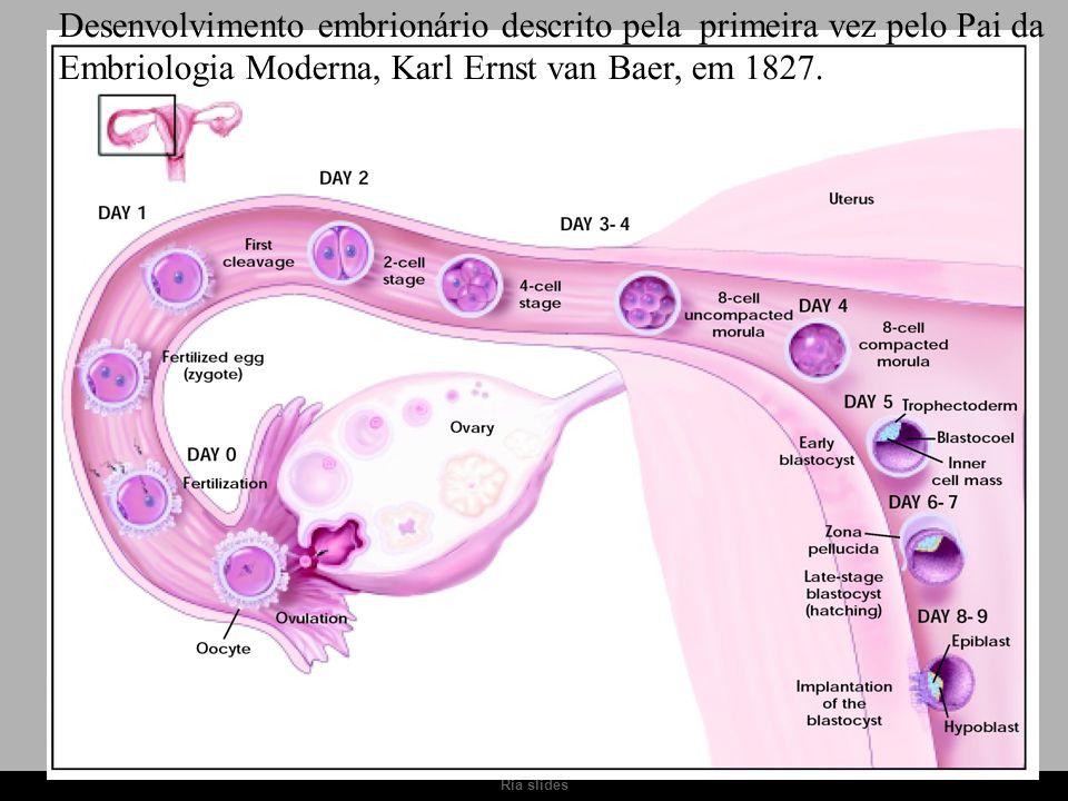 Desenvolvimento embrionário descrito pela primeira vez pelo Pai da
