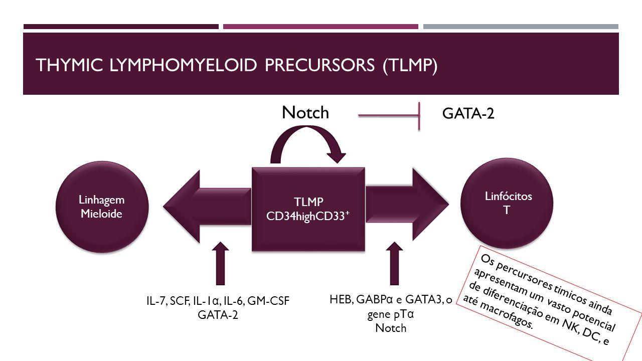 thymic lymphomyeloid precursors (Tlmp)