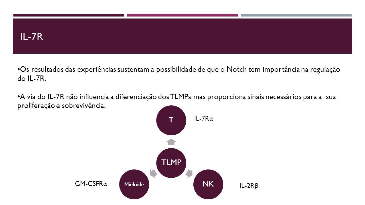 IL-7R Os resultados das experiências sustentam a possibilidade de que o Notch tem importância na regulação do IL-7R.