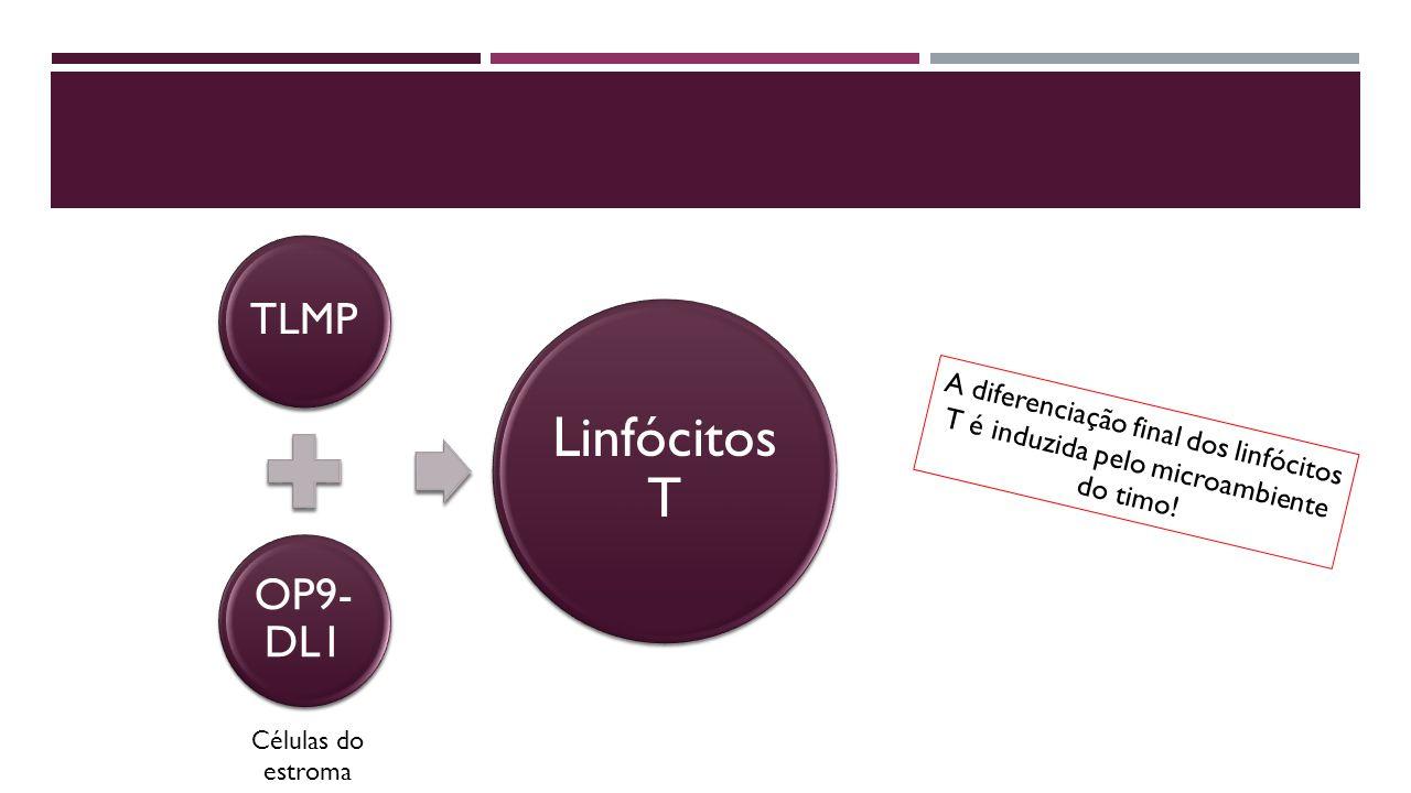 Linfócitos T TLMP OP9-DL1