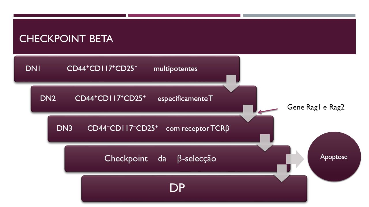 DP Checkpoint Beta Checkpoint da β-selecção