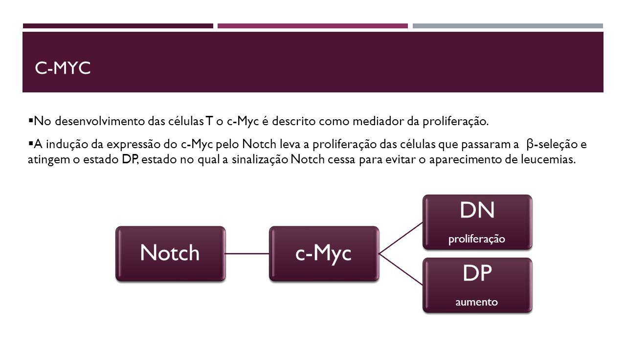 C-Myc No desenvolvimento das células T o c-Myc é descrito como mediador da proliferação.