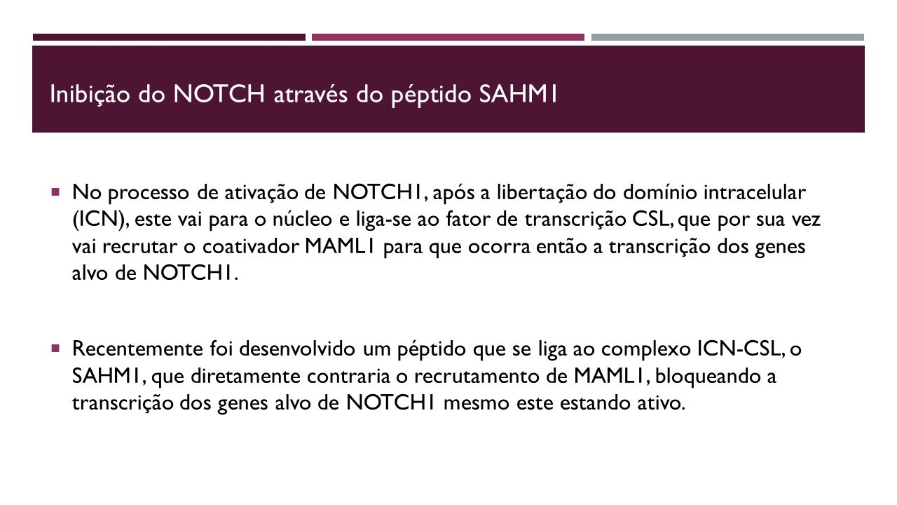 Inibição do NOTCH através do péptido SAHM1