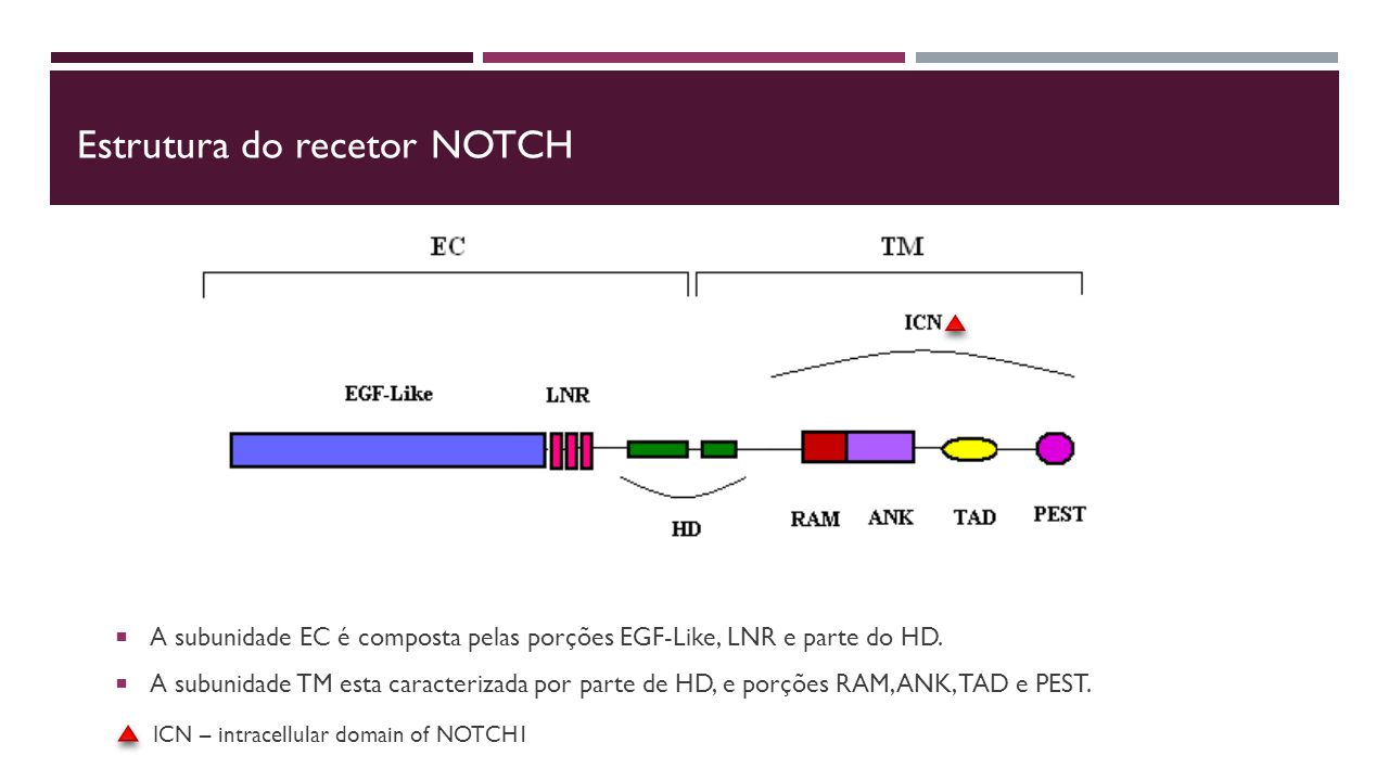 Estrutura do recetor NOtch