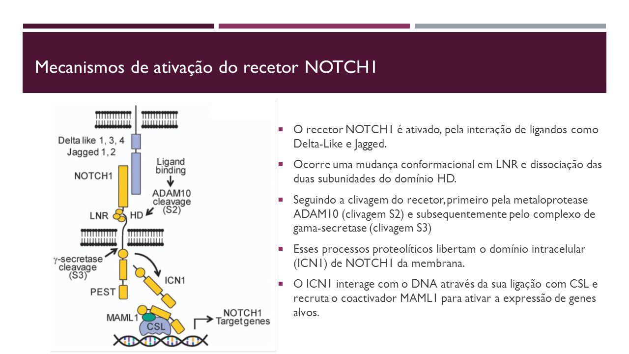 Mecanismos de ativação do recetor NOTCH1