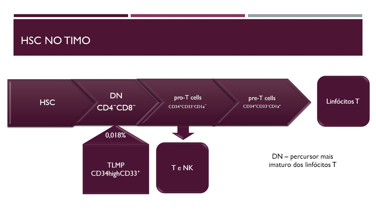 DN – percursor mais imaturo dos linfócitos T