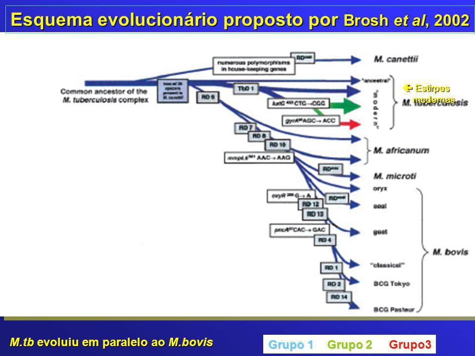 Esquema evolucionário proposto por Brosh et al, 2002